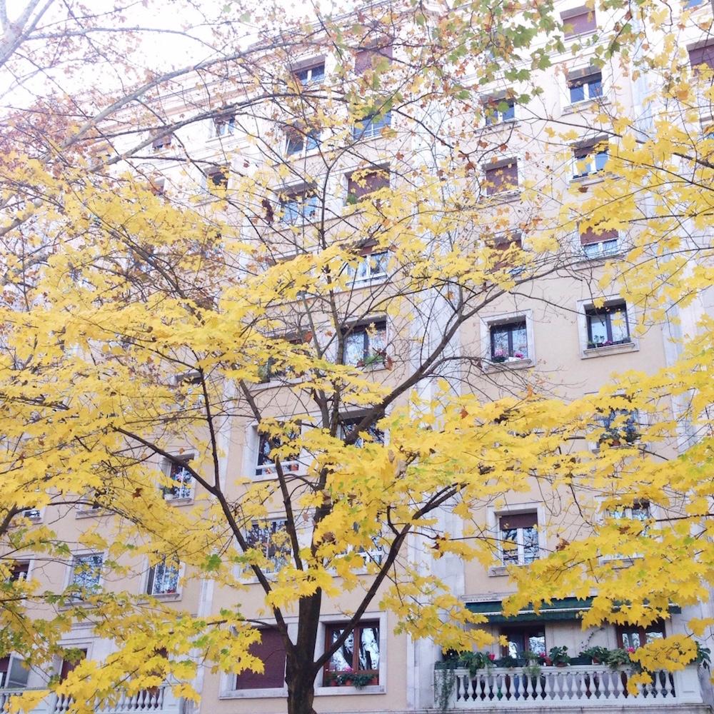 Los árboles en otoño