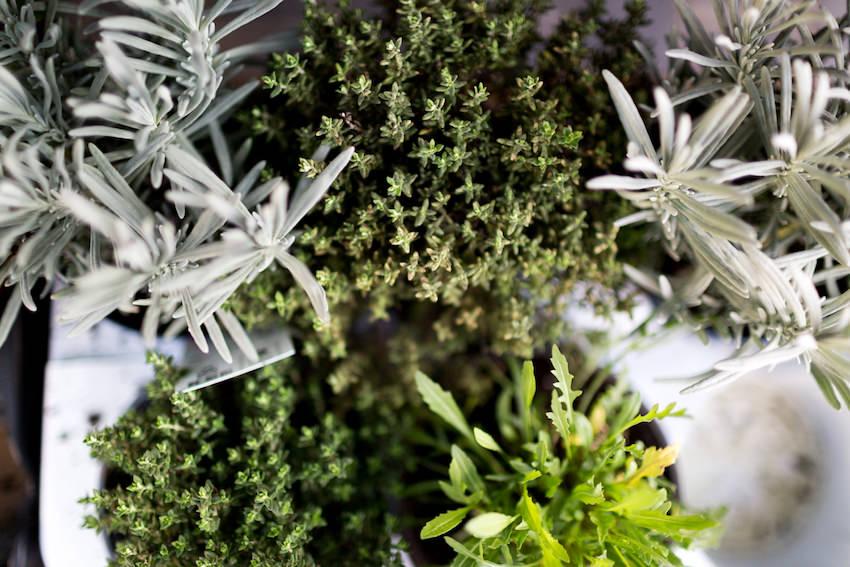 Plantas de los caseríos que se venden en el mercado de la Bretxa