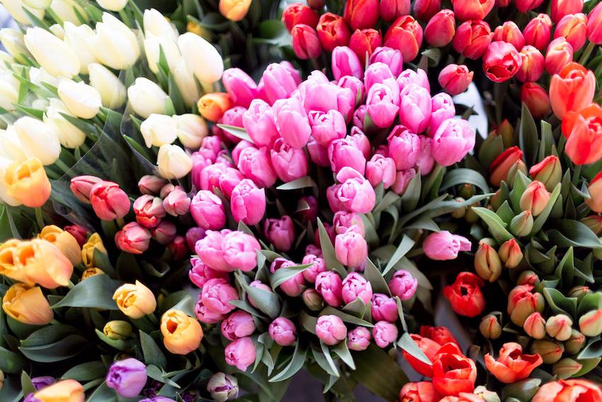 Los tulipanes a la venta en el mercado de la Bretxa en San Sebastián